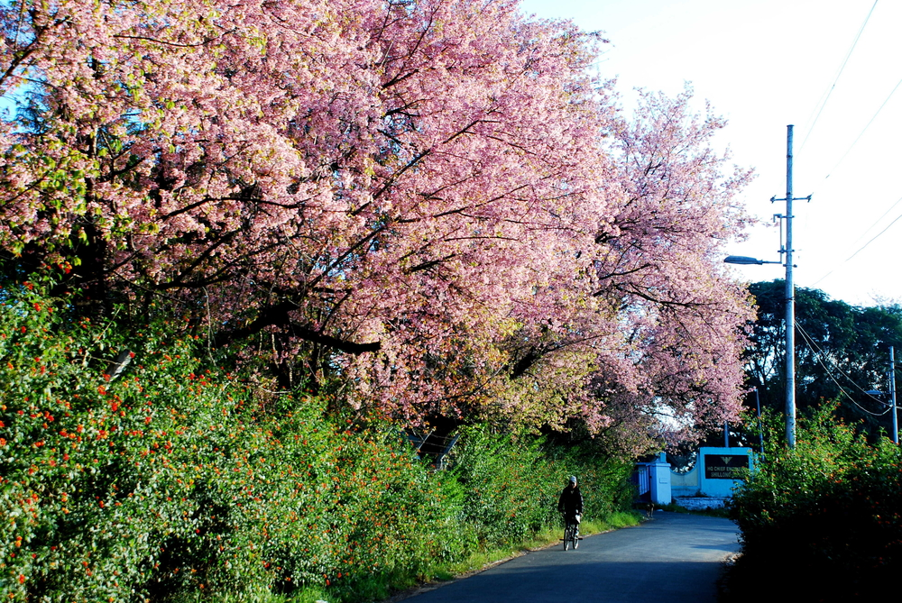 Shillong | Best place to visit in April
