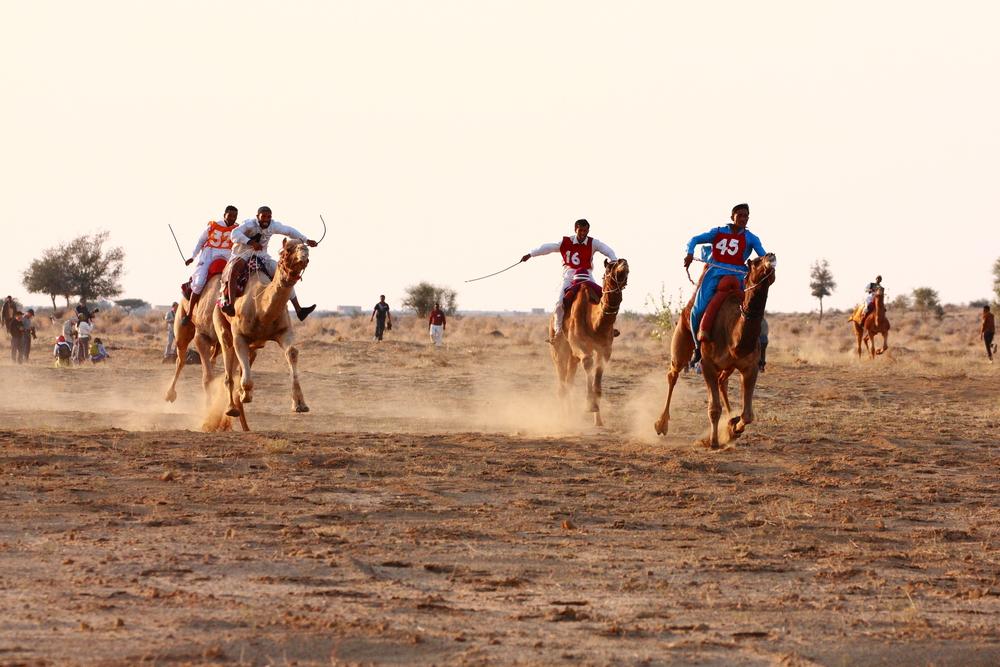 Camel Race in Pushkar Fair 2019