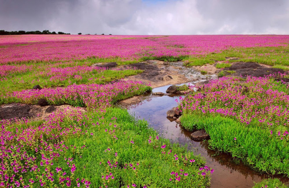 Kaas Plateau | Weekend Getaways near Pune within 200 km