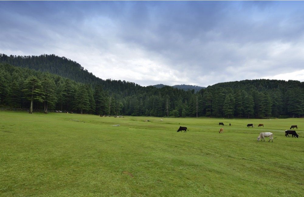 Khajjiar | Hill Stations near New Delhi