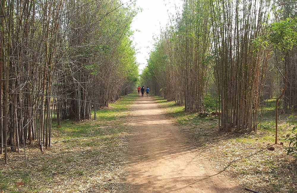 Hennur Bamboo Forest | #3 of 3 Things to do near Bangalore Airport