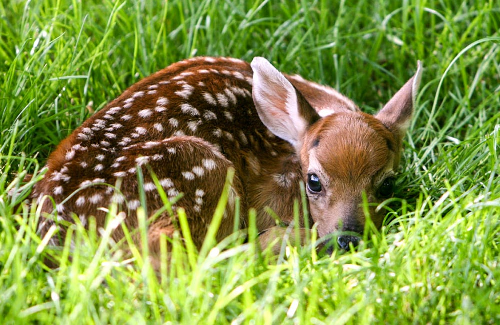 Malsi Deer Park | Places to visit in Dehradun