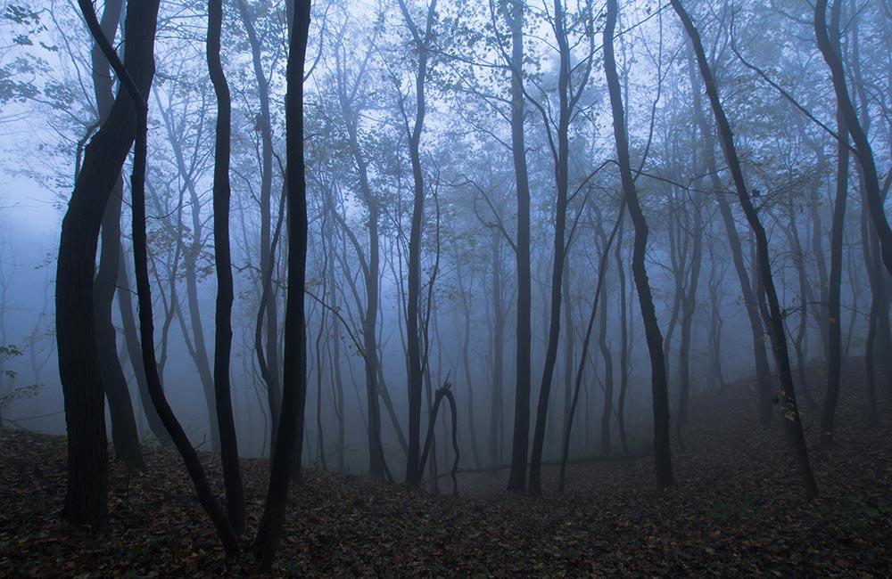 Sanjay Van | Haunted Places in Delhi