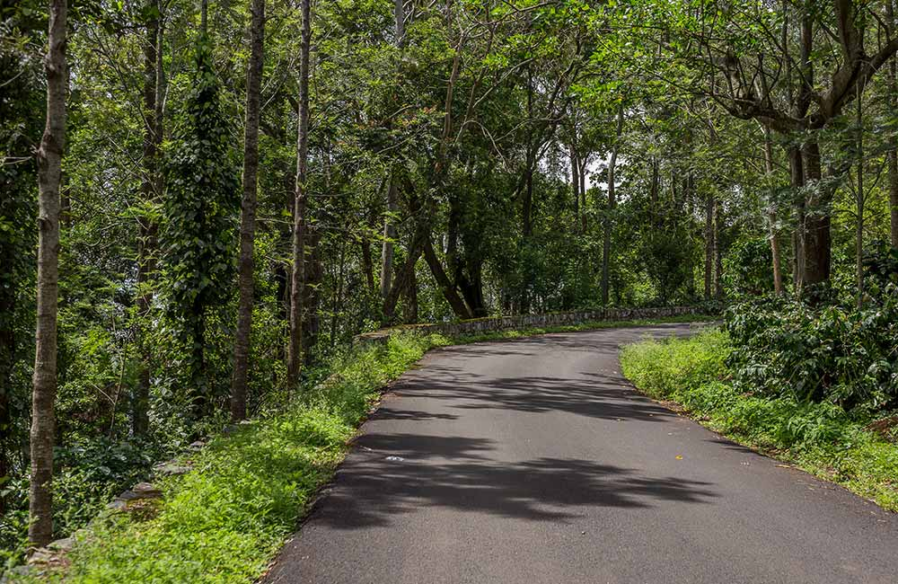 Yercaud | Hill Stations near Chennai within 400 km