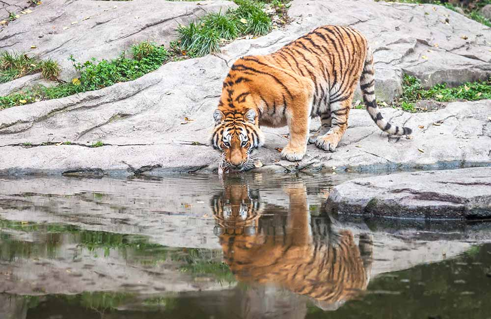 Sundarbans | Best weekend getaways near Kolkata