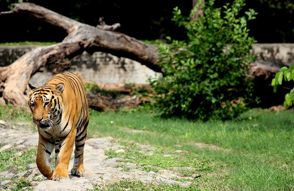 Chhatbir Zoo, Chandigarh