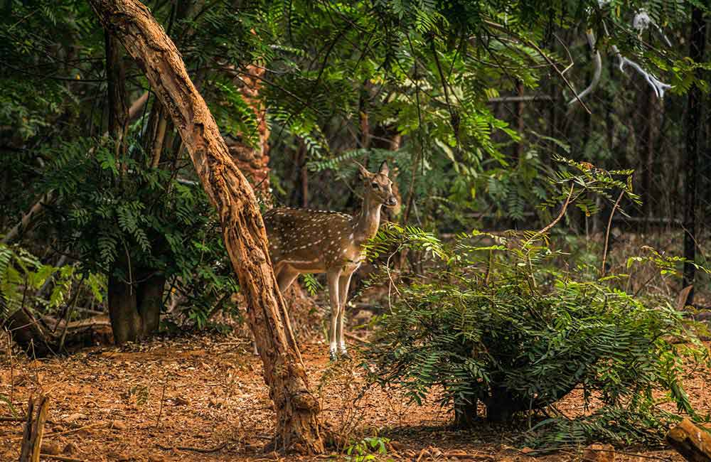 Indira Gandhi Zoological Park (#7 of 11 Best Vizag Tourist Places)