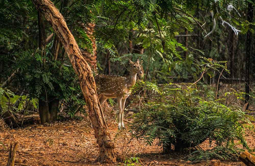 Indira Gandhi Zoological Park(#7 of 11 Best Vizag Tourist Places)