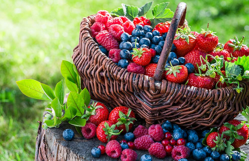 Berries Shopping | Places for Shopping Visit in Mahabaleshwar