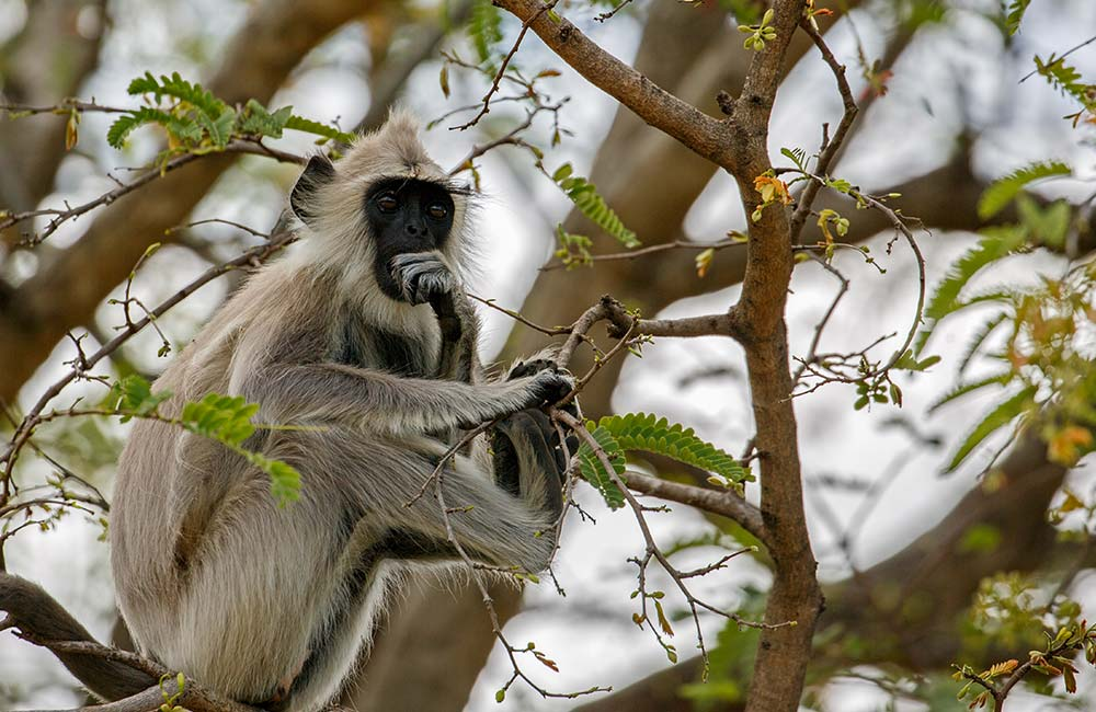 Chinnar Wildlife Sanctuary | Best Places to Visit on Munnar Tour
