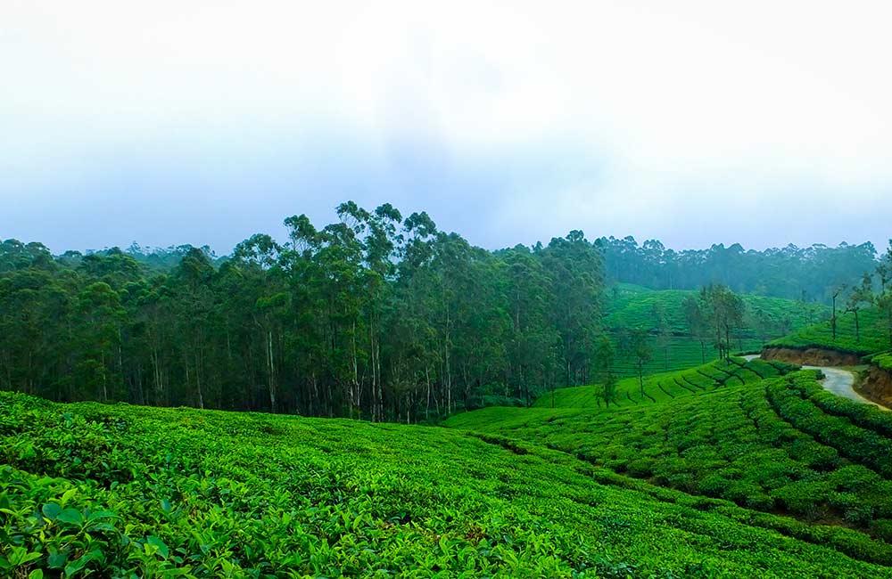 Kolukkumalai Tea Estate | Best Places to Visit on Munnar Tour