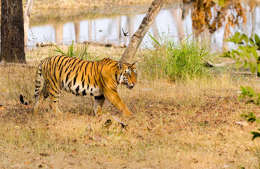 Pench National Park | Picnic Spots in Nagpur