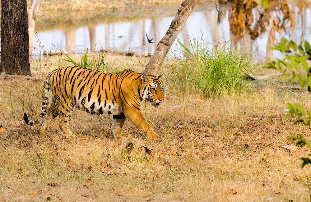 Pench National Park | Picnic Spots near Nagpur