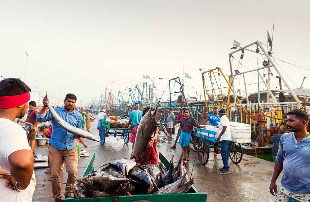 Royapuram Fishing Harbour, Chennai