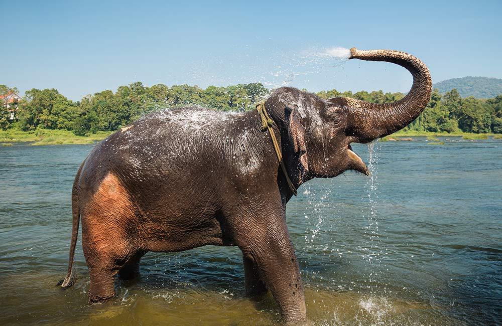 Kodanad Elephant Sanctuary, Kochi
