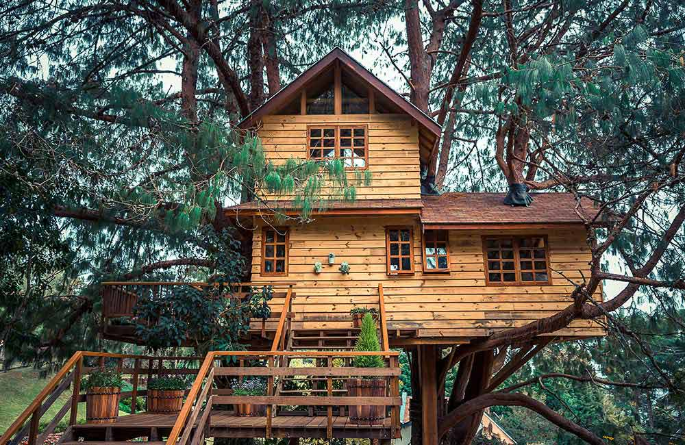 Amazing Experiences in Treehouses