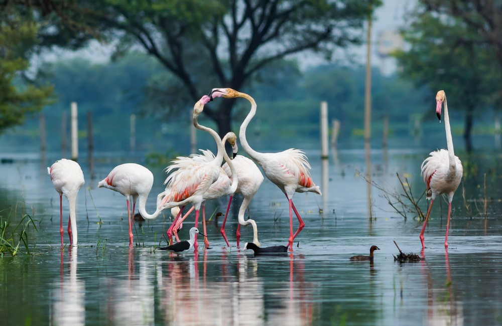 Keoladeo National Park | UNESCO World Heritage Site in Rajasthan