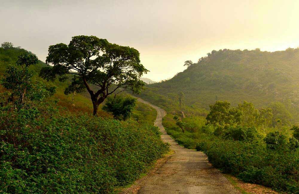 Offbeat Places to Visit near Udaipur within 100 km: Peepliya Ji