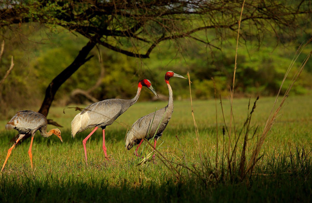 Keoladeo National Park | Picnic spots near delhi for family outing