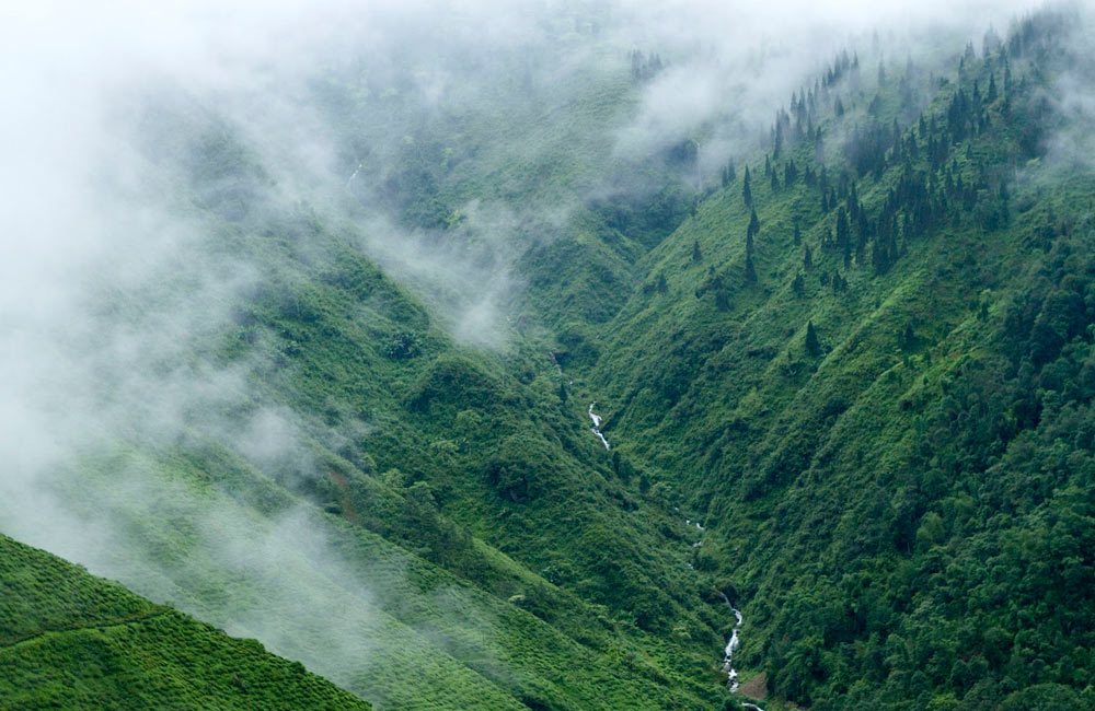 Dooars Valley | Among the Best Hill Stations near Kolkata