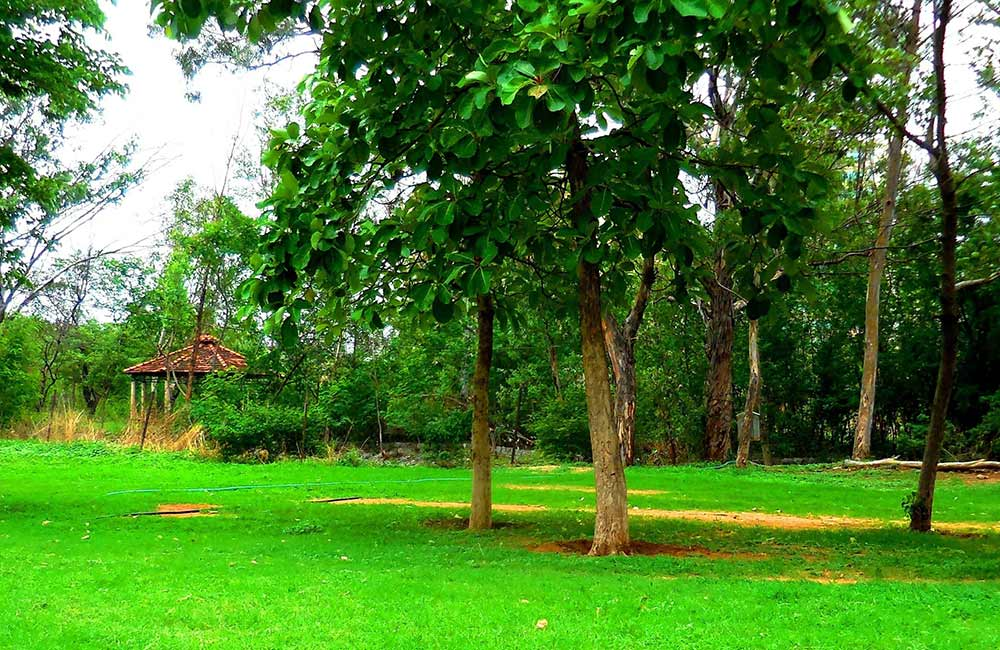 Botanical Garden | #6 of 10 Best Parks in Hyderabad