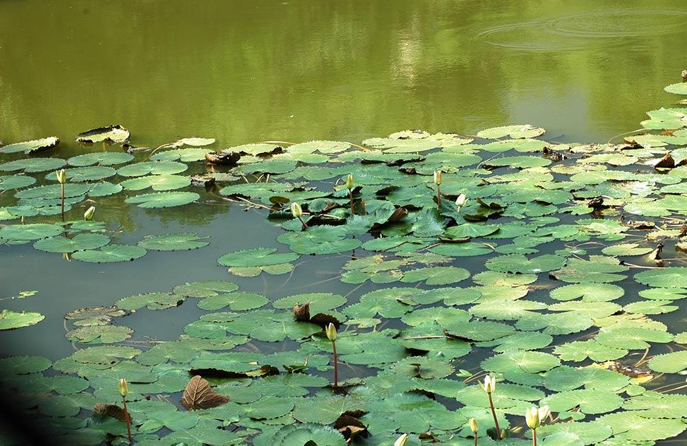 Kengeri Lake