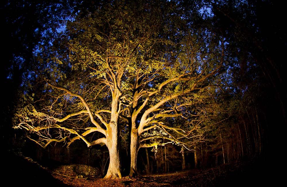 Haunted Tree in Chandkheda