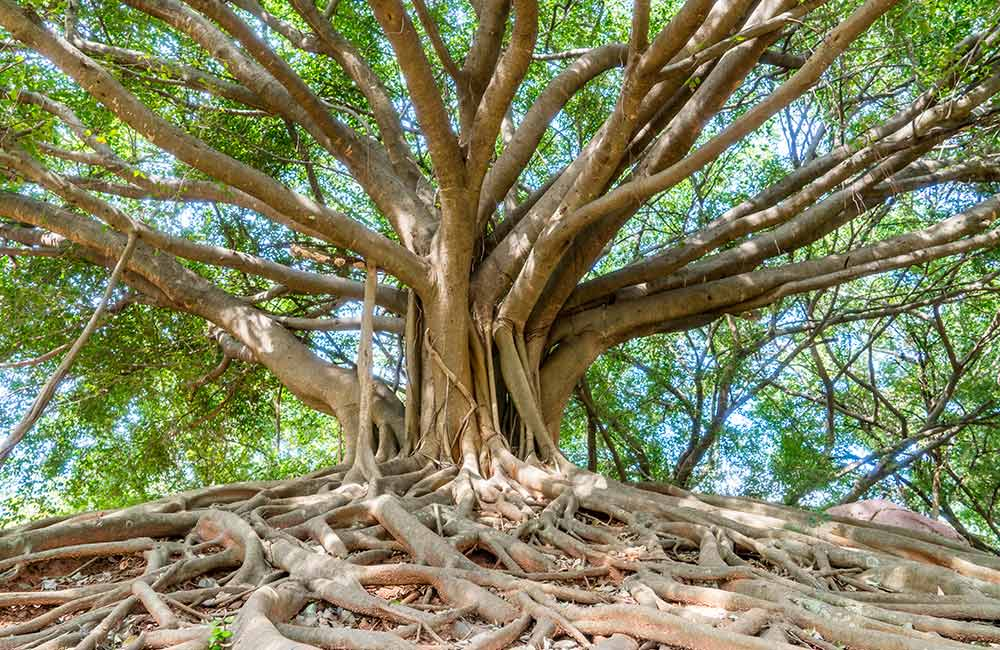 Big Banyan Tree   # 2 of 20 Picnic Spots in Bangalore