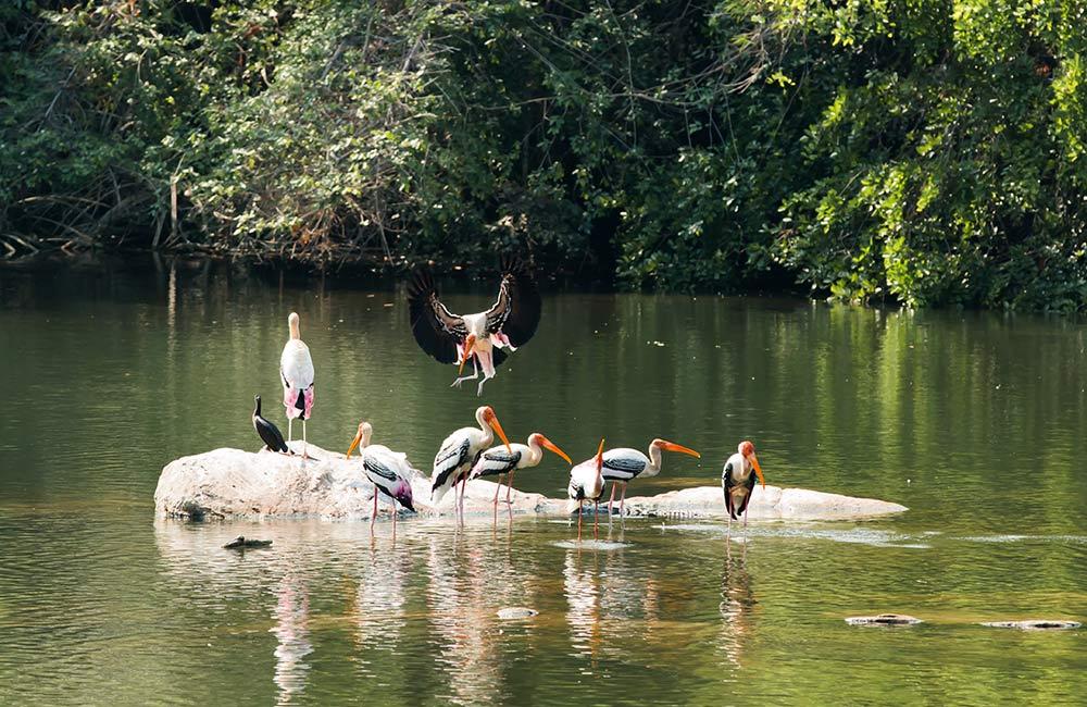 Ranganathittu Bird Sanctuary | # 16 of 20 Picnic Spots near Bangalore
