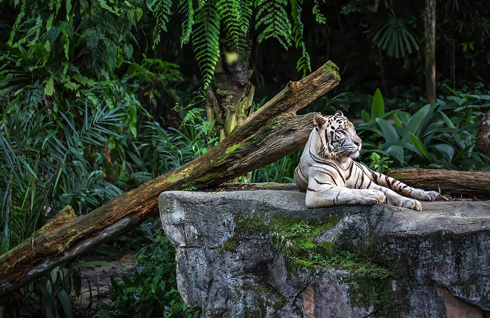Explore the biodiversity at Lucknow Zoo and State Museum