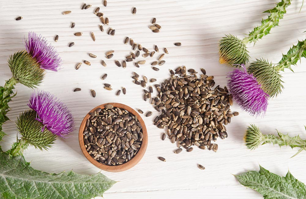 Milk Thistle for the Liver