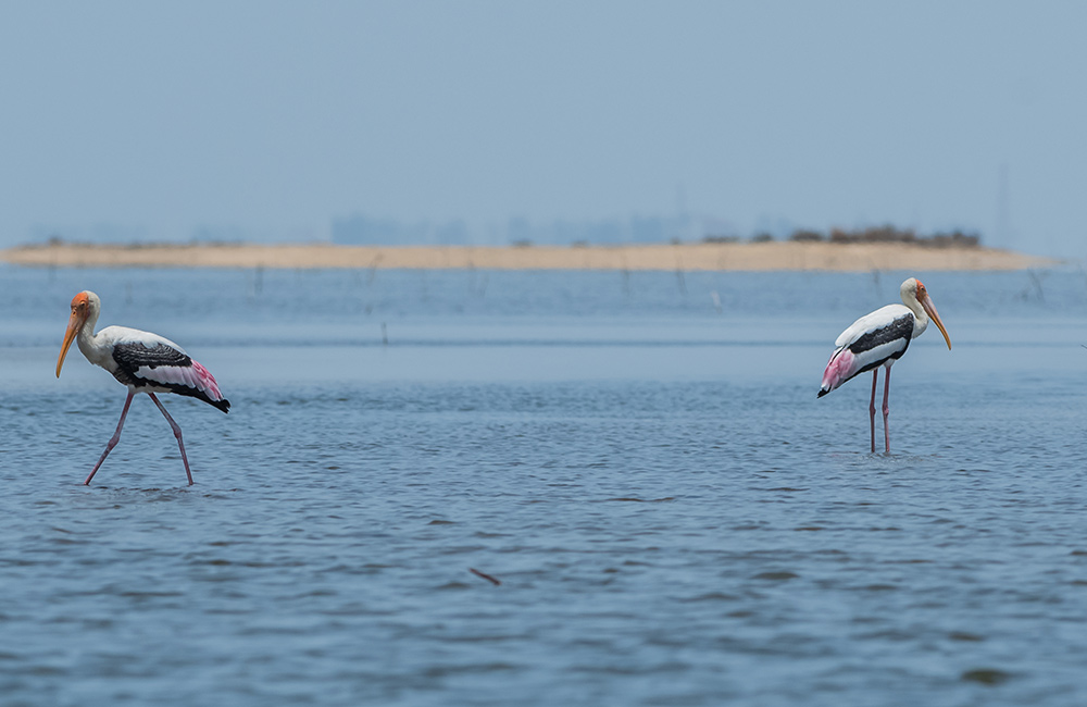 Pulicat Lake | #1 of 10 Best Places for One Day Trip from Chennai