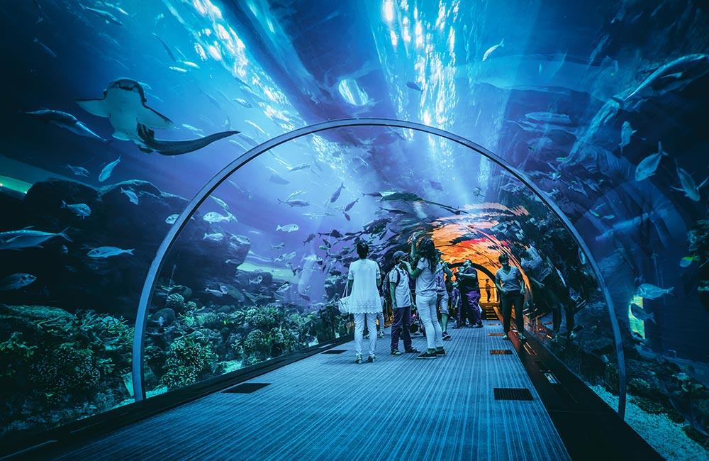 Taraporewala Aquarium | #7 of 10 Best Things to do in Mumbai for Kids