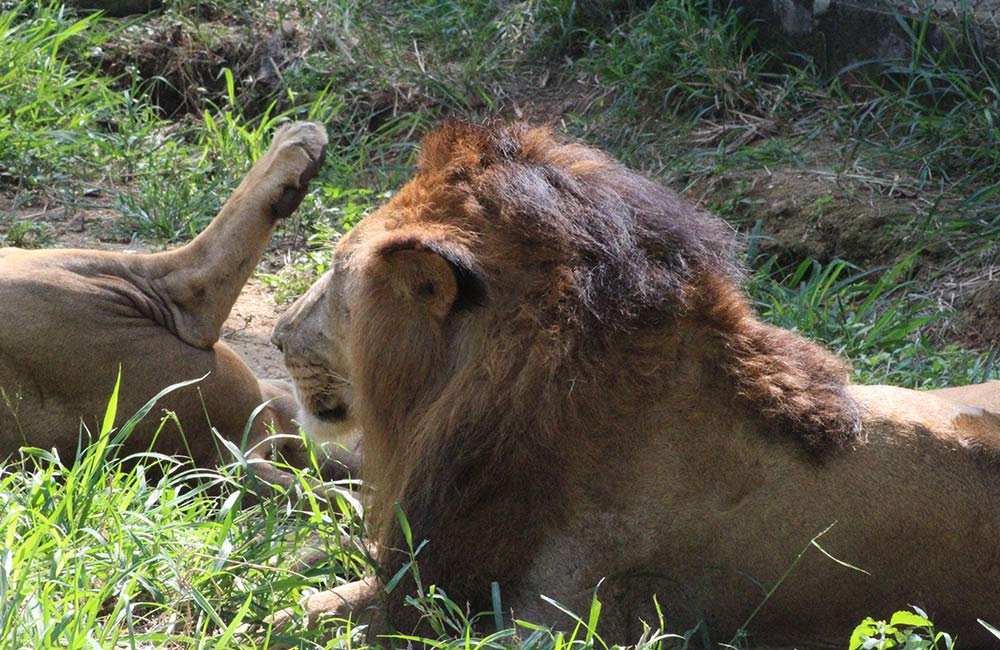 Bannerghatta National Park   #11 of 14 Things to Do in Bangalore for Youngsters