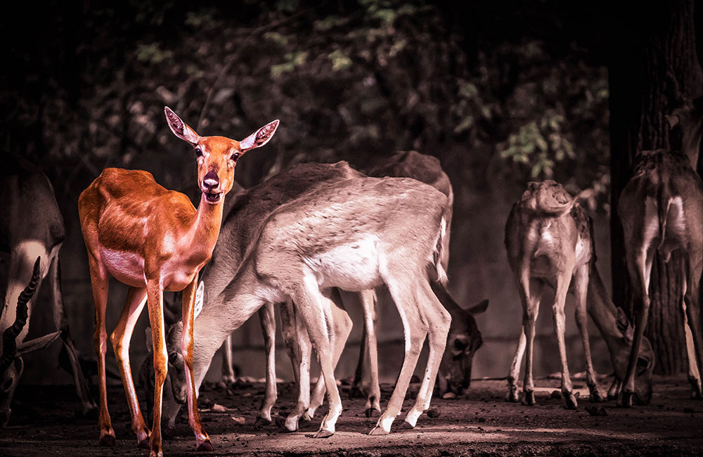 Tour Rajiv Gandhi Zoological Park | Things to do in Pune Alone