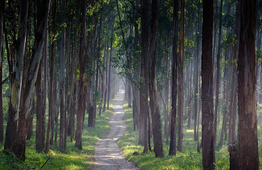 Wayanad,Winter destinations in India