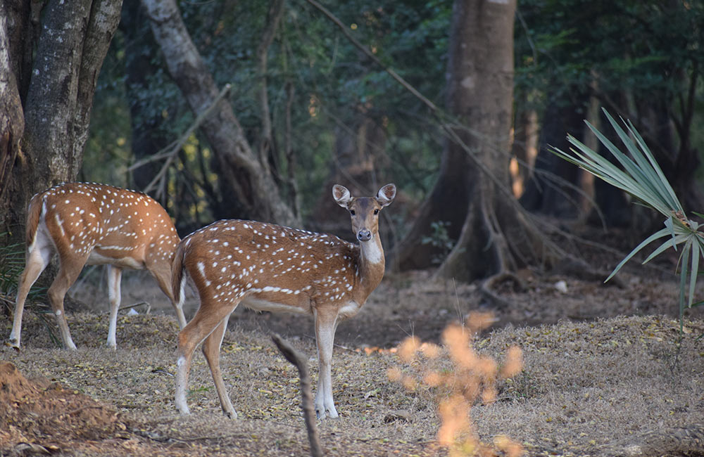 Sanjay Gandhi National Park Tour | #6 of 11 Things to Do in Mumbai this Weekend