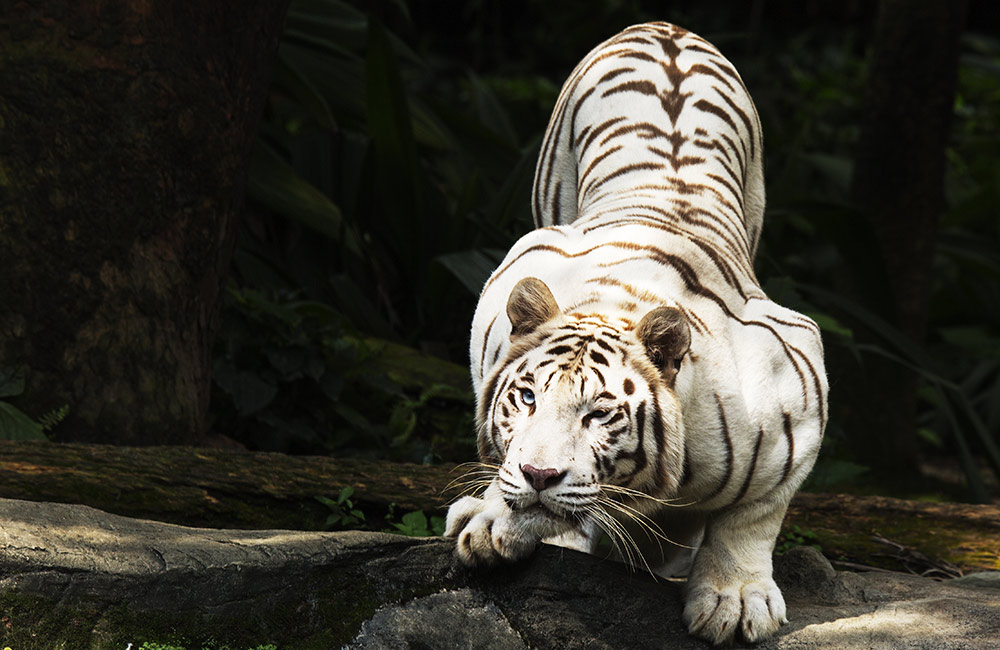 Anna Zoological Park | #12 of 18 Best Places to Visit in Chennai with Girlfriend