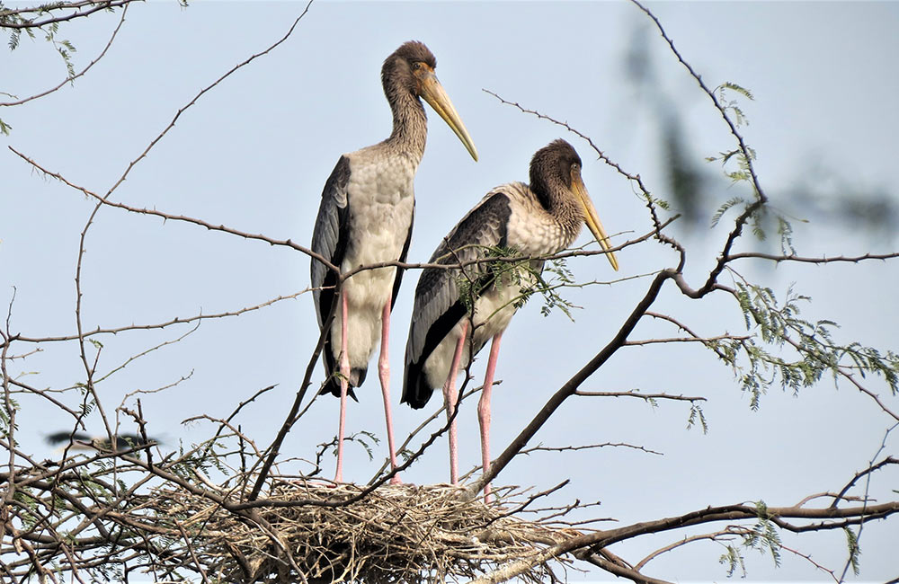 Sultanpur Bird Sanctuary, Gurgaon
