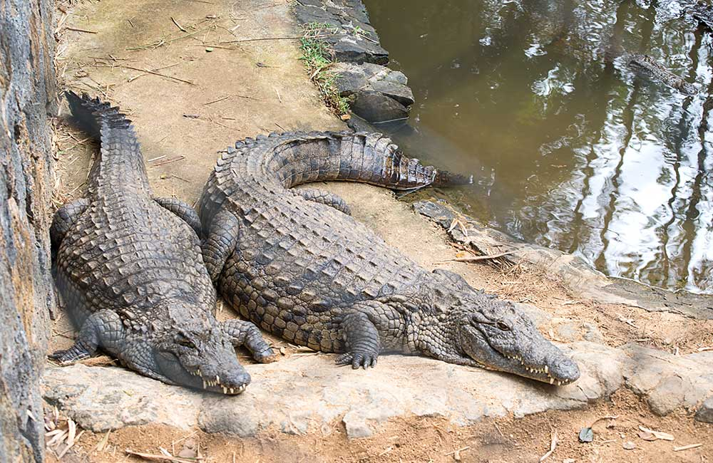 Jijamata Udyan Zoo   #6 of 8 Best Places to visit in Mumbai for fun