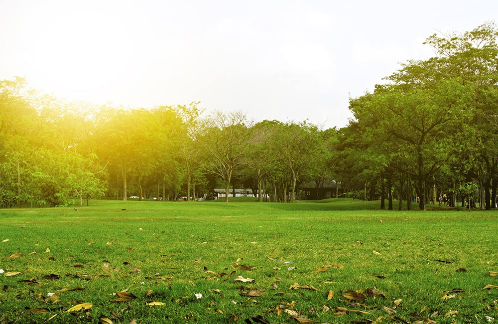 City Park | #3 of 8 Best Places to visit in Greater Noida