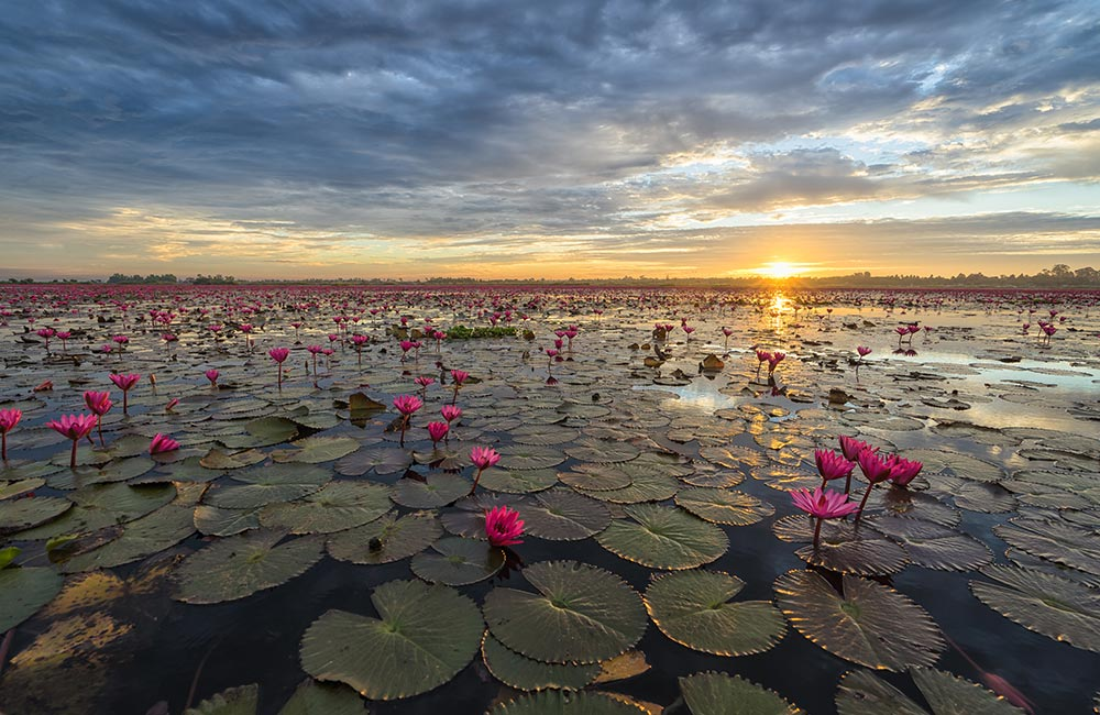 Lotus Lake | #2 of 15 Best Places to Visit near Indore within 200 km