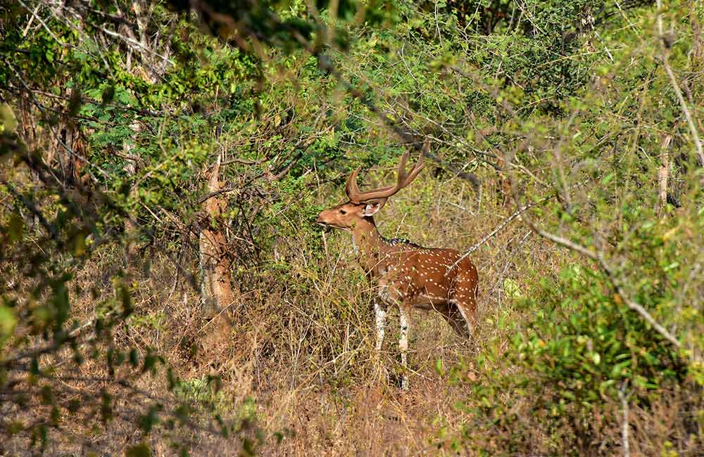 Ralamandal Wildlife Sanctuary | #1 of 15 Best Places to Visit near Indore within 200 km