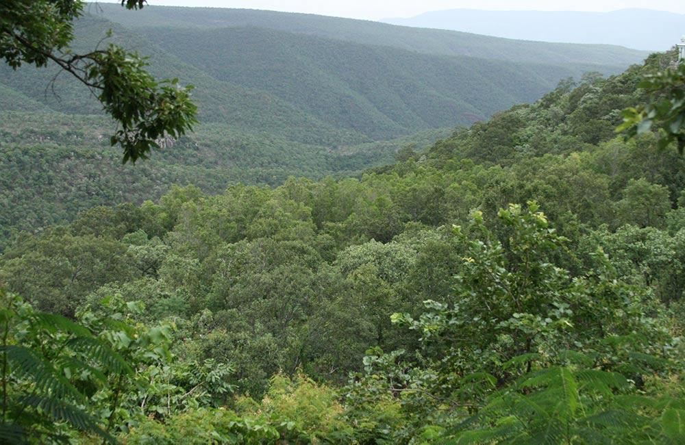 Sri Venkateswara National Park, Tirupati