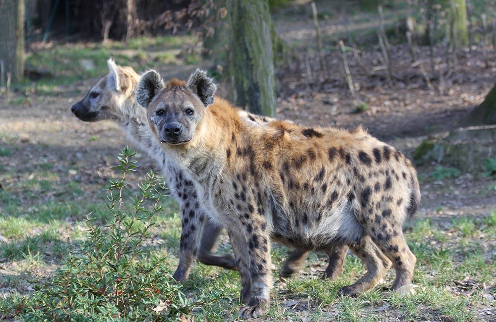 Gwalior Zoo, Gwalior