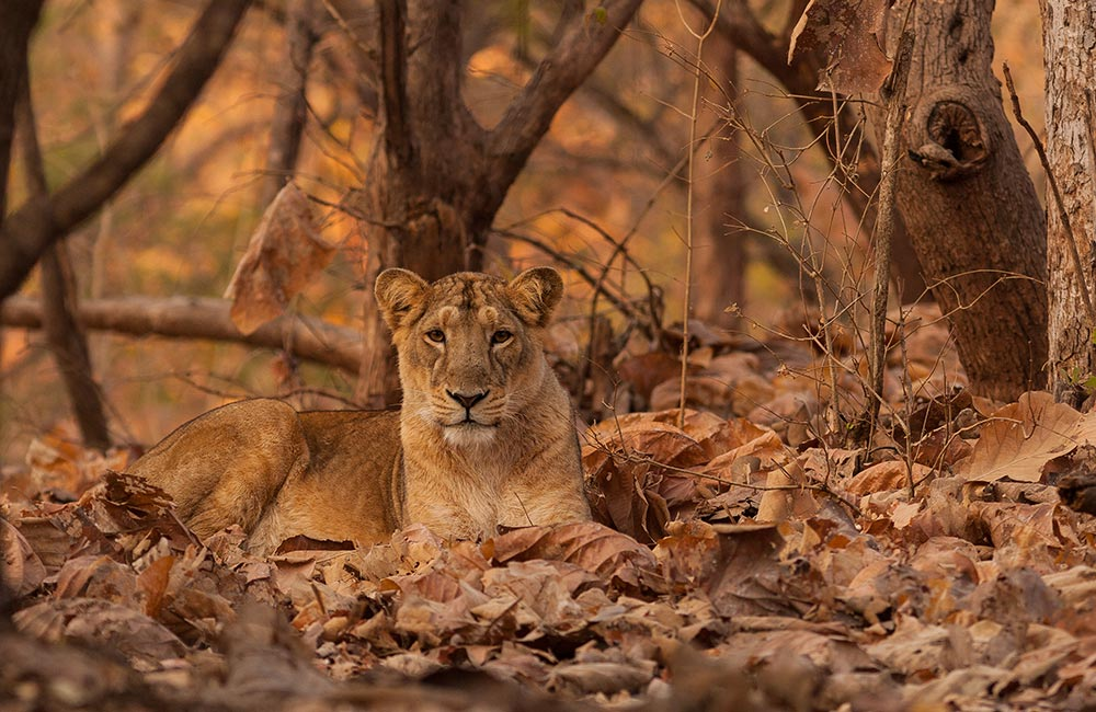 Gir Forest National Park and Wildlife Sanctuary