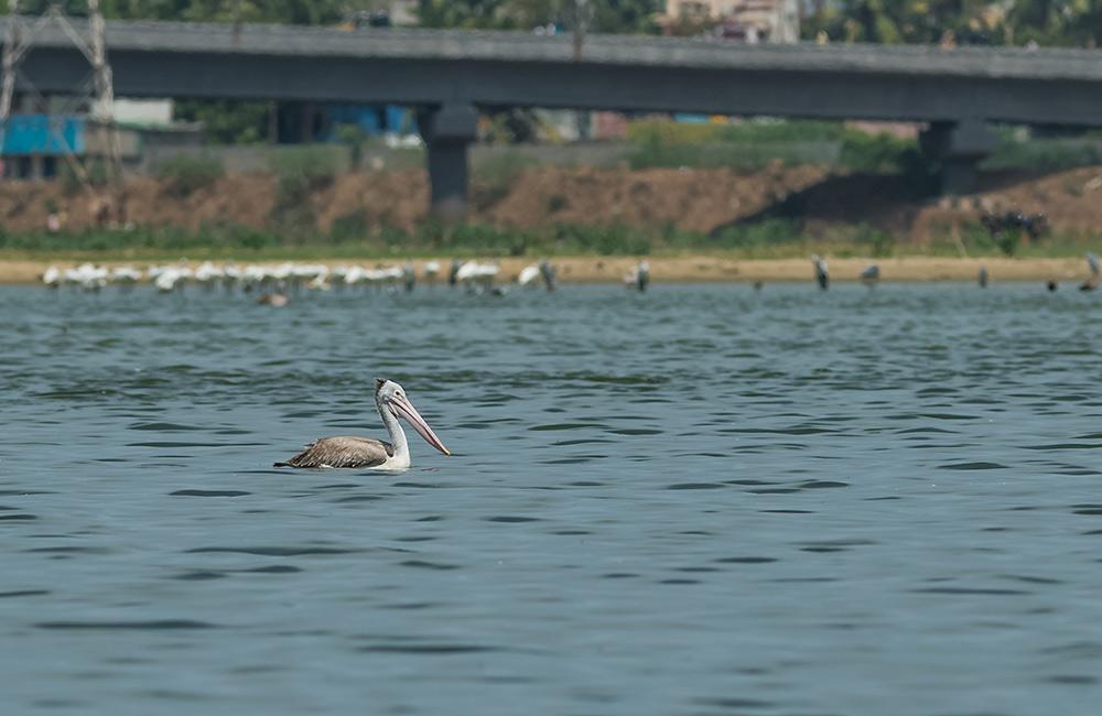 Korattur Lake, Chennai