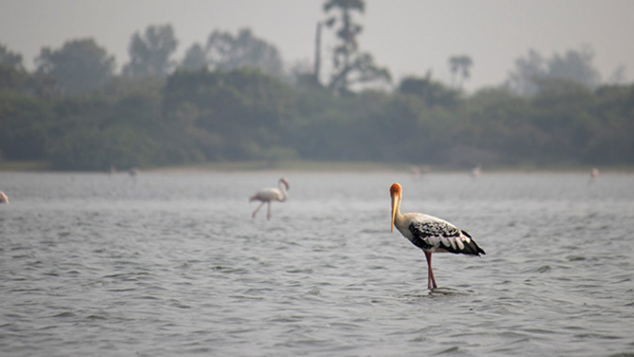 7 Scintillating Lakes in and around Chennai - FabHotels