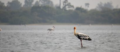 7 Scintillating Lakes in and around Chennai
