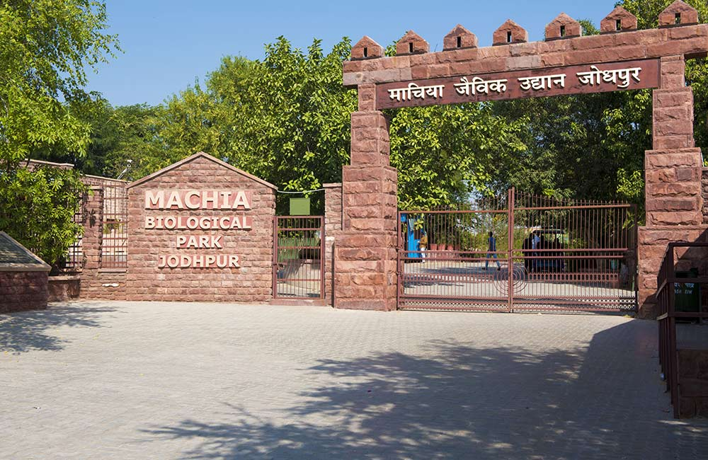 Day at Machia Biological Park | #20 of 20 Things to Do in Jodhpur